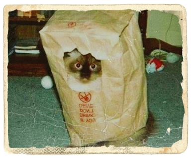 cat-in-bag2